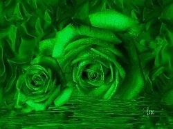 GreenROSES-001